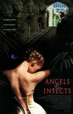 Ángeles & insectos