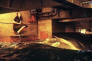 Tiburones en aguas turbulentas