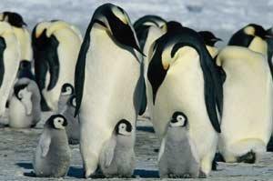 Un pingüino en mi película