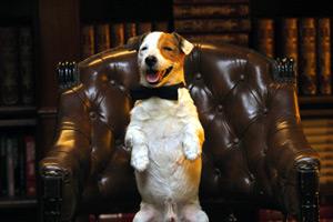Pancho, el perro millonario