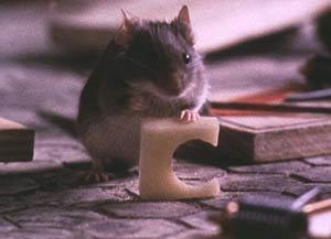 ¡Maldito roedor!